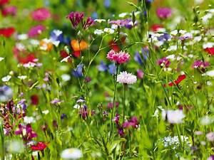 Wiese Mit Blumen : fotoping blumenwiese leinwandbilder ~ Watch28wear.com Haus und Dekorationen