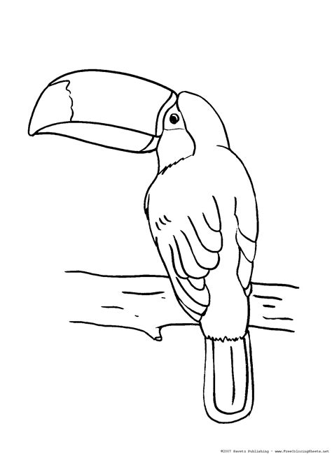 toucan coloring pages getcoloringpagescom
