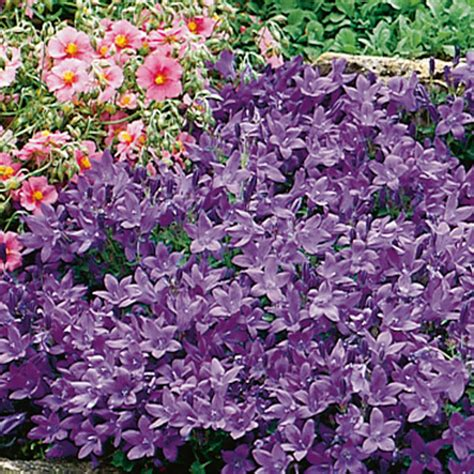 best shade perennials zone 5 28 best shade perennials zone 5 partial shade plants zone 5 salmon astilbe light shade best