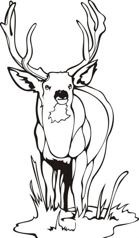 deer coloring pages    print