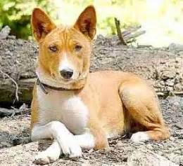 non shedding dog breeds small dog breeds picture