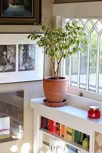 Plante Balcon Facile D Entretien : plantes d polluantes entretien facile purifiez l air en ~ Melissatoandfro.com Idées de Décoration