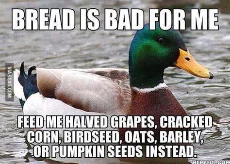 don t feed bread to ducks trusper