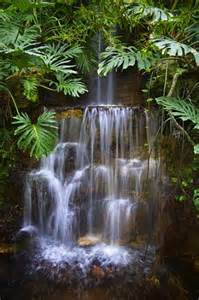 Pretty Rainforest Waterfall
