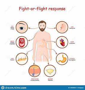 Fight Flight Human Brain Stock Illustrations  U2013 25 Fight