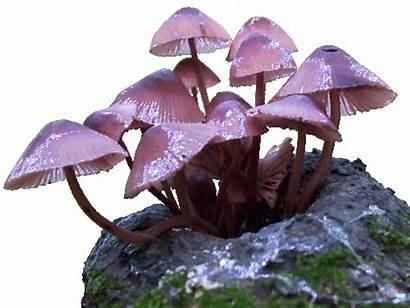 Mushroom Snail Reblog Mar Pm