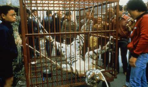 myanmar china growing illegal tiger  wild cat trade