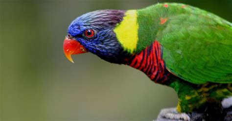 bird apps may confuse real birds