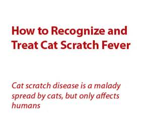 cat scratch fever treatment how to recognize and treat cat scratch fever