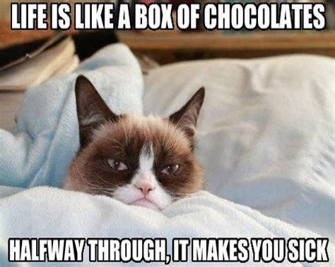 Sad Cat Meme - sad kitten meme 28 images sad cat meme www imgkid com the image kid has it cat logic at its