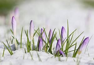 Blumen Im Winter : hintergrundbilder blumen natur gras schnee winter fotografie ast gr n kanon ~ Eleganceandgraceweddings.com Haus und Dekorationen