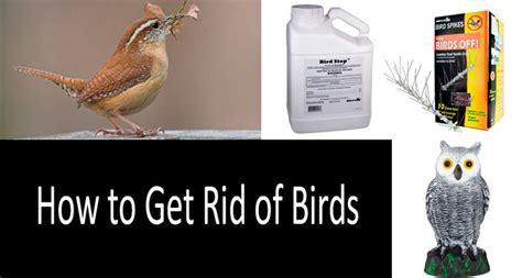 how to get rid of birds with top 17 best bird deterrents