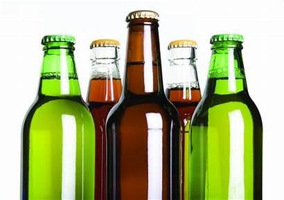 Beer Hops Study Craft Honeys Local