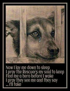 Shelter Animal Rescue Quotes