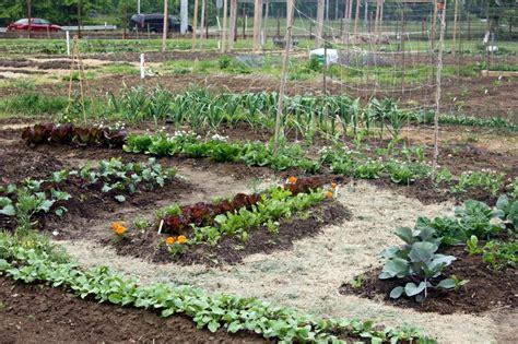 grass for vegetable gardens fafardvegetable garden soil preparation