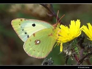 Was Machen Schmetterlinge Im Winter : was machen schmetterlinge im winter schmetterlinge ~ Lizthompson.info Haus und Dekorationen
