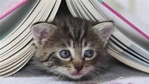 Katzen Fernhalten Von Möbeln : video vorleser f r katzen tiere suchen ein zuhause ~ Michelbontemps.com Haus und Dekorationen