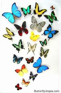 Best butterflies wings feathers images on