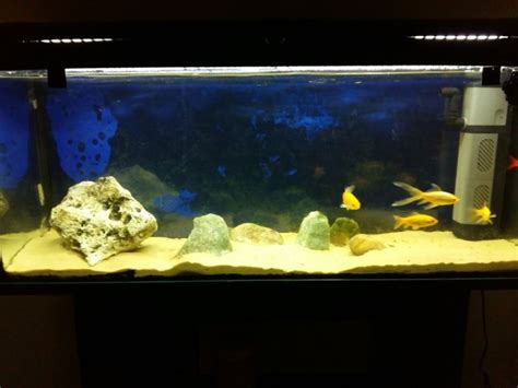 120 litre fish tank for sale in fairview dublin from daithiduck