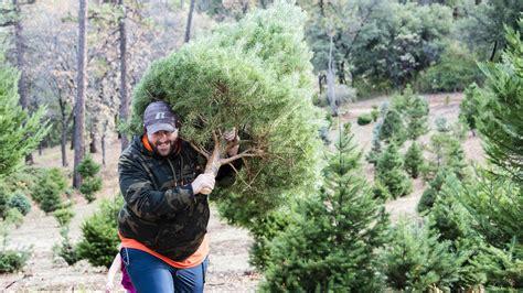 28 best christmas tree farms sacramento sierra