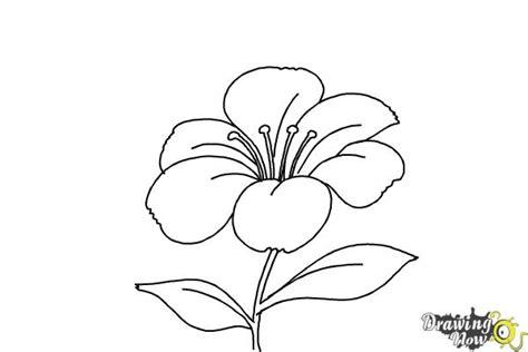 draw  flower step  step drawingnow