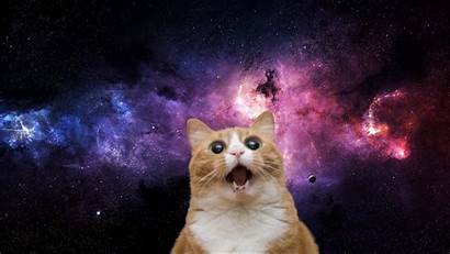 Space Cat Cats Wallpapers Crazy Backgrounds Attached