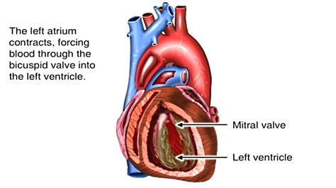 heart works animation pathway  blood flow tutorial