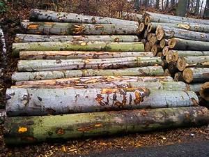 Brennholz Kaufen Polen : stammholz aus tschechien klimaanlage und heizung ~ Eleganceandgraceweddings.com Haus und Dekorationen