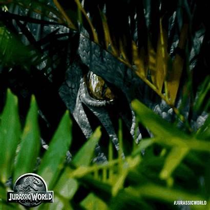 Jurassic Park Rex Indominus Isla Dinosaur Dinosaurs