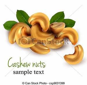 EPS Vectors of Cashew nuts Vector illustration - Cashew ...