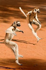 Happy Tuesday Funny Lemur Pictures