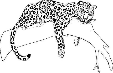 jaguar coloring pages  rainforest jaguar animal