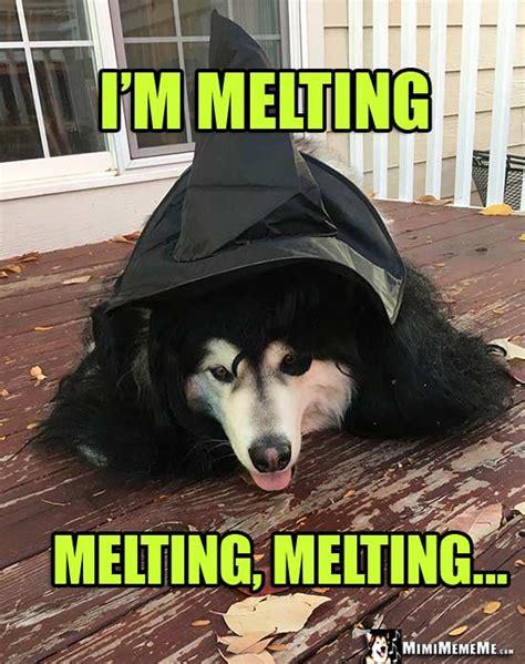 halloween dog jokes funny dogs wearing costumes spooky dog memes pg    mimimememe
