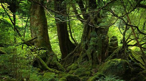 nature trees forest woods magic wallpaper  p