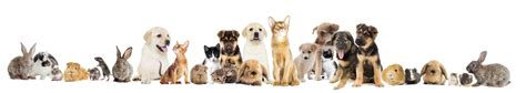 Transport d'animaux domestiques à Montpellier | S.A.D ...
