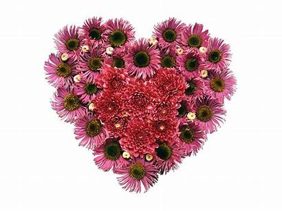 Heart Flower Valentines Wallpapers Saint Desktop