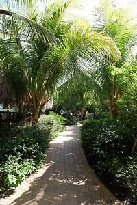 Palmier De Jardin : plage et palmiers ~ Nature-et-papiers.com Idées de Décoration