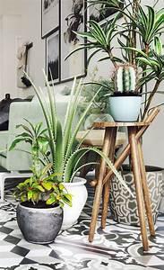 Plante Pour Appartement : salon botanique accumulation de plantes d 39 int rieur pour ~ Zukunftsfamilie.com Idées de Décoration