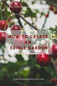How To Create An Edible Food Forest Garden