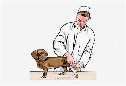 Dog Leg Clipart Cartoon Clip Bandage Bandaging
