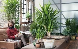 Plante D Intérieur Haute : palmier d int rieur esp ces propri t s et conseils d ~ Premium-room.com Idées de Décoration