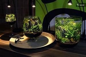 Pflanzen Terrarium Einrichten : group of tiny aquariums aquarien fische pinterest aquarium aquarien und aquarium terrarium ~ Orissabook.com Haus und Dekorationen