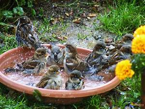 Abreuvoir A Oiseaux Pour Jardin : photo moineaux au bain ~ Melissatoandfro.com Idées de Décoration