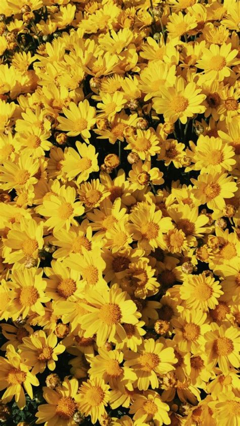 pin  sofie mendes  flowers   yellow aesthetic