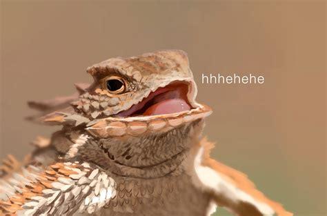 Hehehe Lizard Meme - wtf french