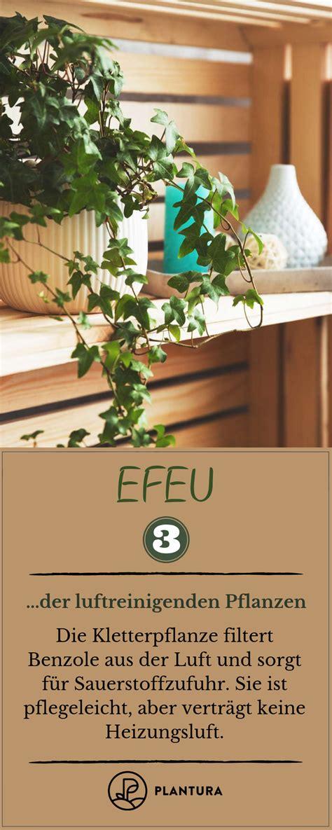 pflanzen die giftstoffe aus der luft filtern luftreinigende pflanzen die top 10 gesund leben lifestyle ern 228 hrung pflanzen