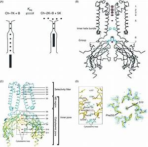 Kir Channel Crystal Structure And Cation