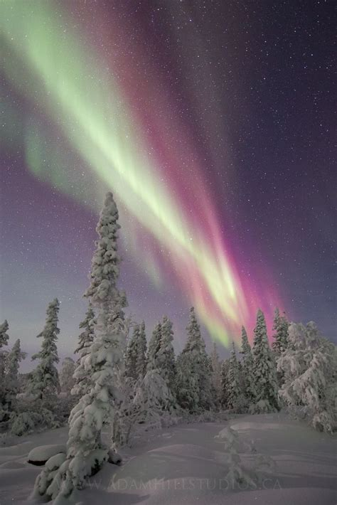 red christmas aurora  adam hill  px northern