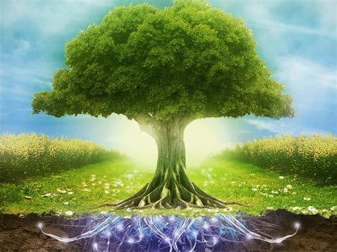 Wallpaper Free Tree Images by Tree Root Wallpapers And Background Images Stmed Net