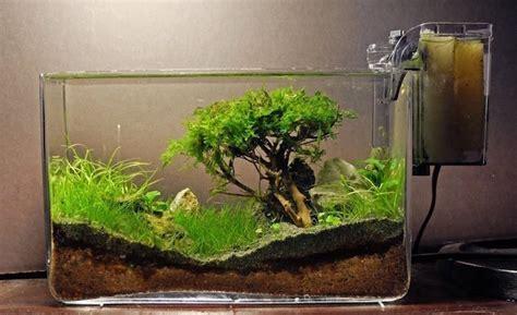 comment faire un aquarium plante plante aquatique jetez vous 224 l eau en 47 photos archzine fr